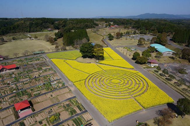 maze_kagoshima.jpg