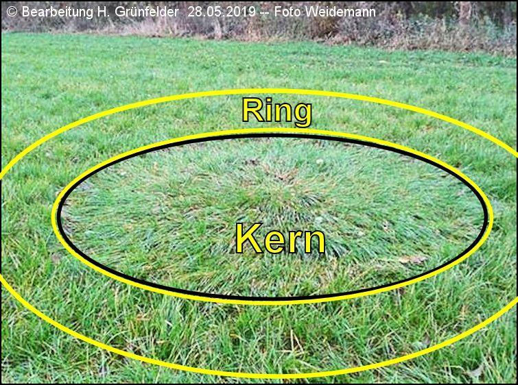 Graskreis Aufbau